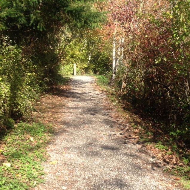 Connelly Creek Trail near Sehome Village