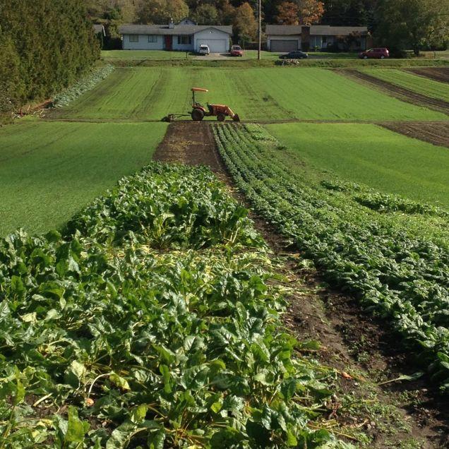 Wintering fields at Joe's Garden, Bellingham, WA