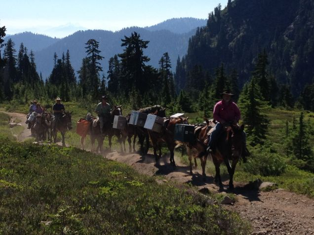 Backcountry packtrain at Morovitz Meadow