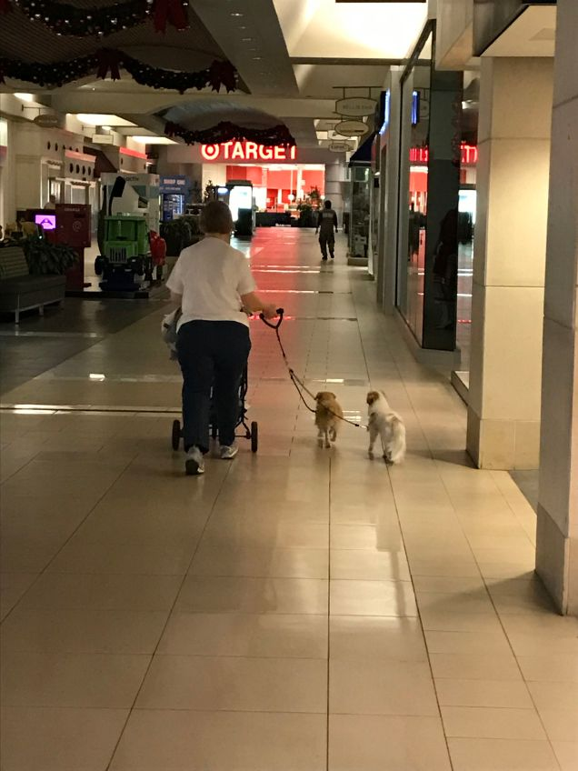 This gal pushed a stroller with her two dogs. Sometimes they walked and sometimes they strolled.